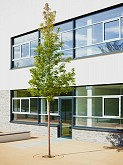 Geschwister-Scholl-Schule, Steinbach